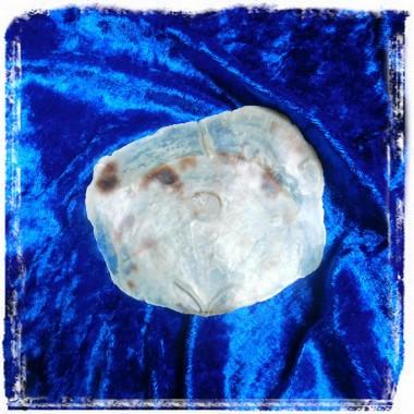 Perlmutt-Muschelschalen - natürliche Seifenschalen